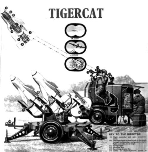 TIGER CAT