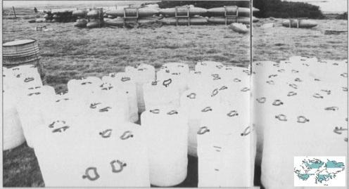 bombas de napalm pradera del ganso.