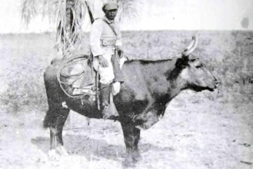 guerra del chaco-32-35 (13) buey-caballo