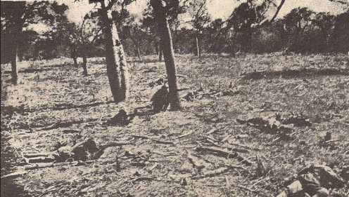 guerra del chaco-32-35 (31)fffg