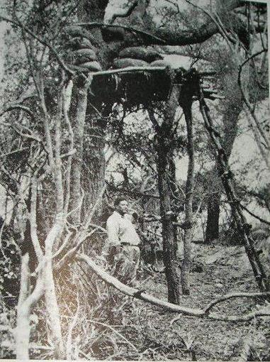 nido de ametralladora paraguaya