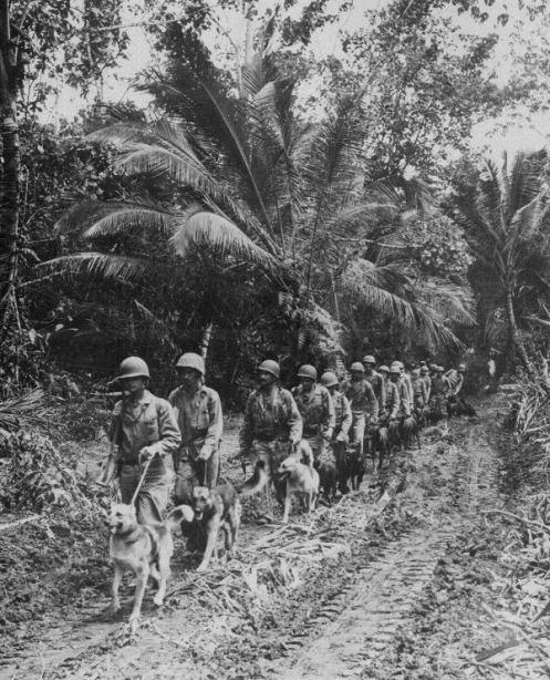 Marine-Raider-War-Dogs
