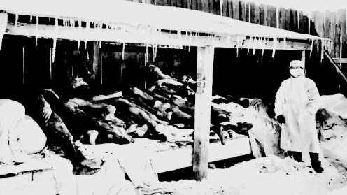 unidad 731 cadaveres