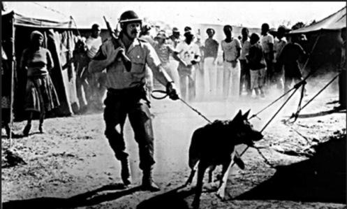 Disturbios sudafrica-2